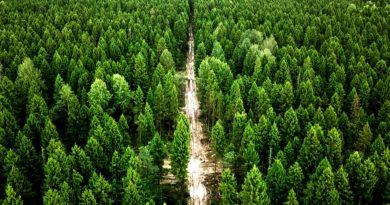 Вологодские активисты при поддержке регионального отделения «ЗПЧ» отстояли Пуловский лес
