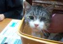 Дело «нар и котиков» добралось и до Японии